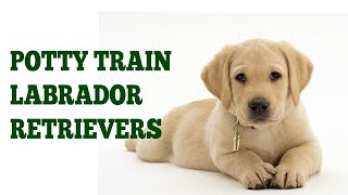 How To Easily House Train Labrador Retrievers