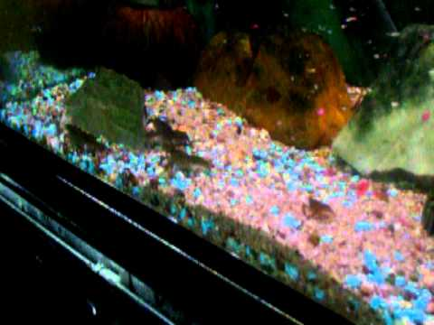 Nourriture en aquarium de mes crevisses youtube for Nourriture aquarium