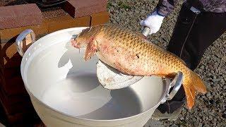 鯉(コイ)まるごと1匹。たまごがたっぷり入った鯉を野外で鍋料理にする!!! thumbnail