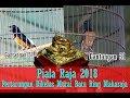 Piala Raja  Pertarungan Berkelas Murai Batu Ring Maharaja No   Saling Balas Tembakan  Mp3 - Mp4 Download