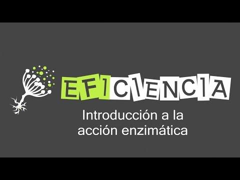 INTRODUCCIÓN A LA ACCIÓN ENZIMÁTICA. Estado activado Complejo Enzima-sustrato