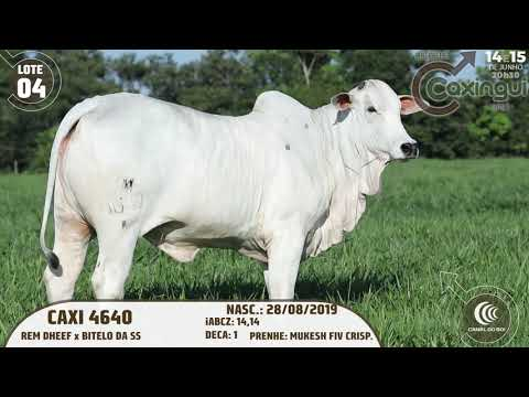 LOTE 04   CAXI 4640