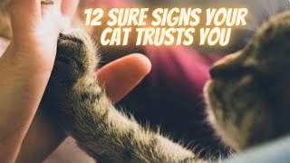 12 Sure Signs Your Cat Trusts You