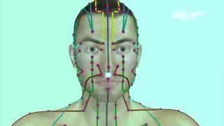 (VTC14)_ Hệ thống kinh mạch trong con người