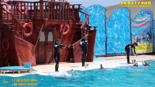 """Театр морских животных """"Акватория"""" (Ялта): общий танец дельфинов"""