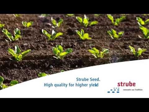 Strube Sugar Beet Sugar Beet Seed Video