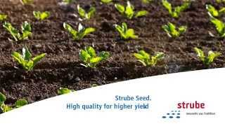 Strube Sugar Beet Sugar Beet Seed Video