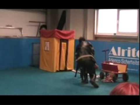 1. internationales Trickdog Turnier Schweiz