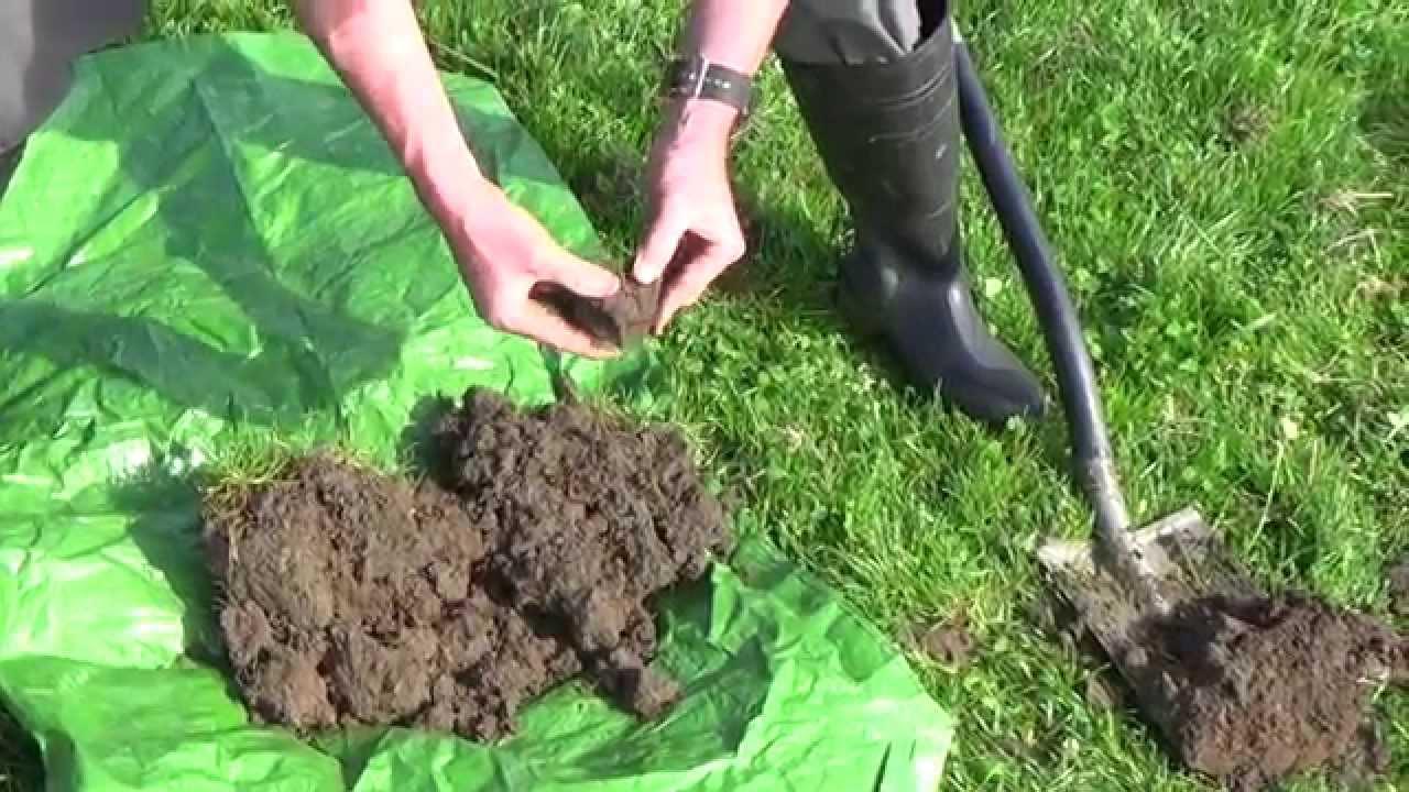 The Real Gardener  Notill tool for clay soil daikon