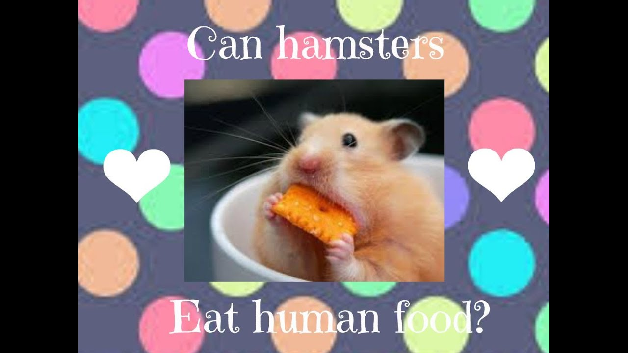 how to cook hamster food