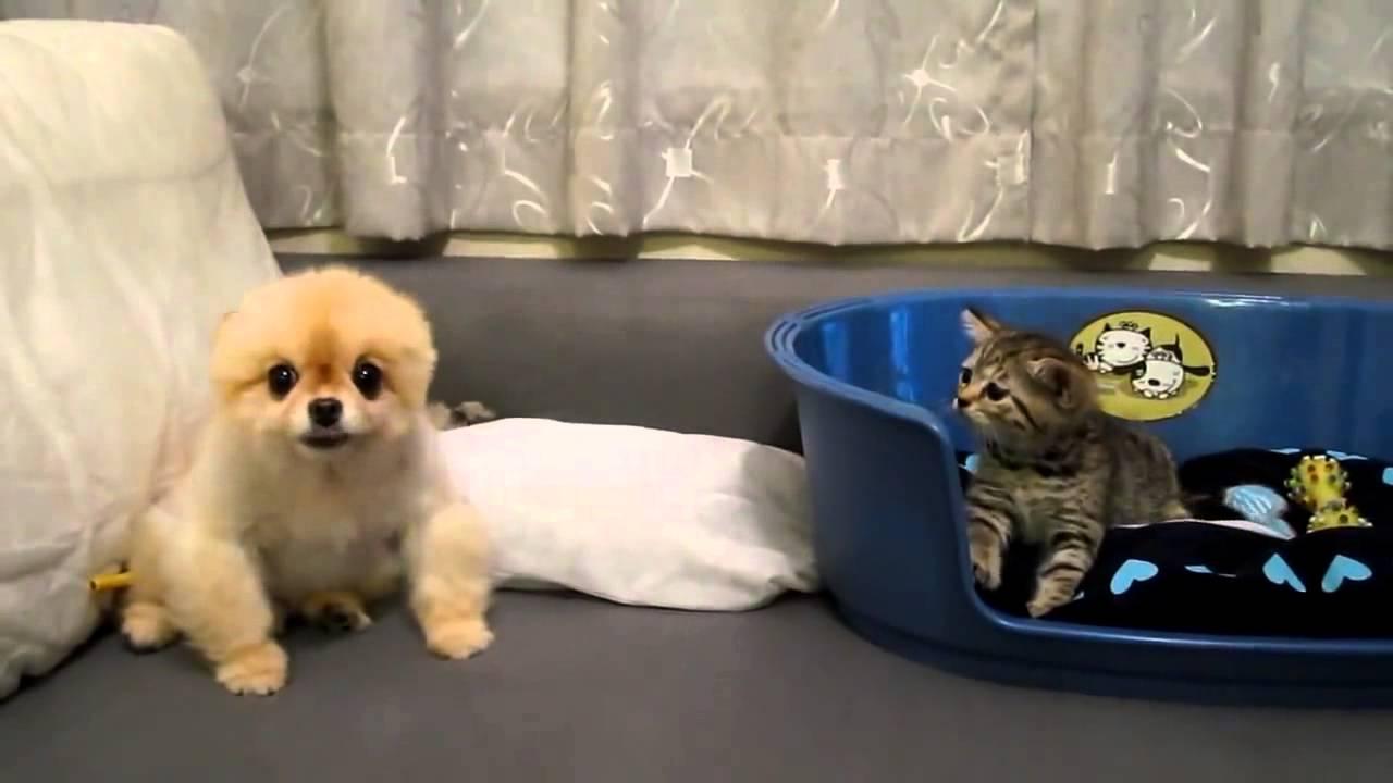 Шкодливый котенок и серьезный щенок - YouTube
