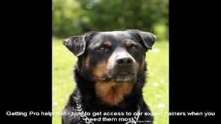 Rottweiler Training Dvd For Sale