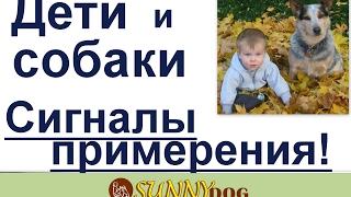 дети и собаки сигналы примерения