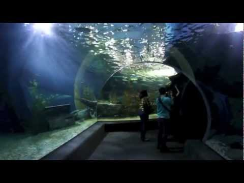 SEALIFE at Siam Ocean World (Bangkok Aquarium)