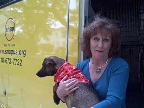 Spay Neuter Assistance Program Receives Funding For Their Mobile Clinic