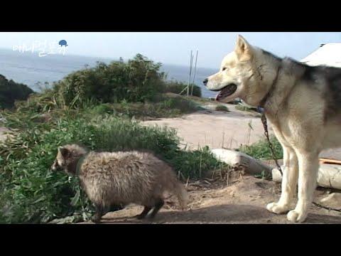 개보다 더 개같은 야생 너구리 🦝|KBS 주주클럽 070513 방송