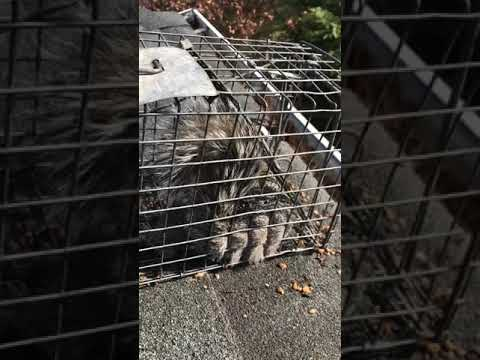 squirrel-control-nassau-county,-new-york