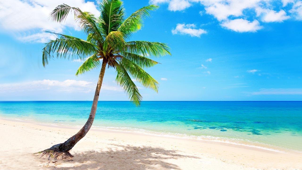 plage tropicale avec palmier ocean relaxant mer calme pour la relaxation nature zen dormir