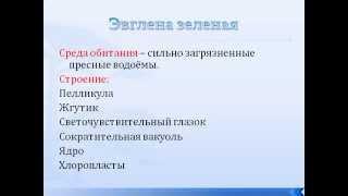 Подтип Жгутиконосцы. Эвглена зеленая.AVI