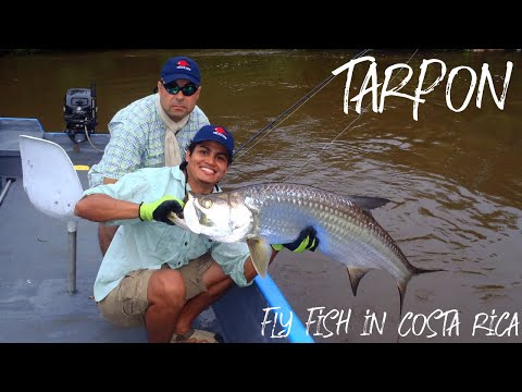 Tarpon In Wild River's - Fly Fish In Costa Rica