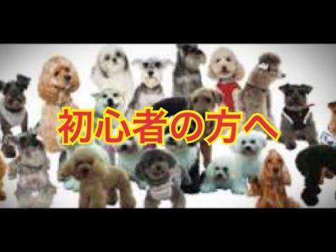 【犬の種類紹介チャンネル】