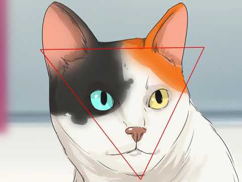 How to Identify a Japanese Bobtail