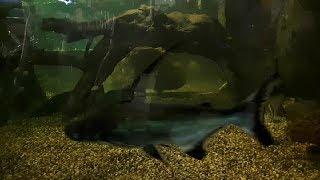 Экзотические рыбы. Пираньи и другие виды рыб.