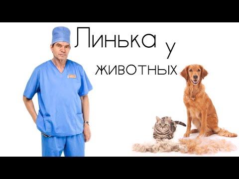 Линька домашних животных