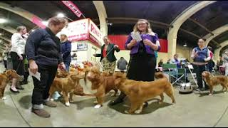 360 Video: The second annual Beverly Hills Dog Show | Los Angeles Times