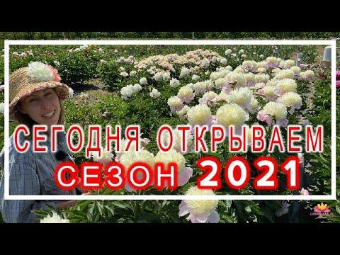 Пион TOUCH OF CLASS. Открытие цветочного сезона 2020/21 / Сад Ворошиловой