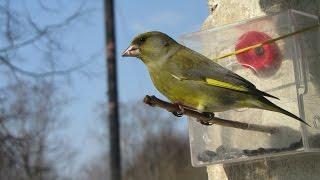 Птицы России. Зима весна