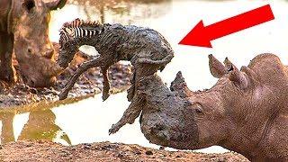 10 Животных, Которые Спасли Жизнь Других Животных