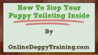 How To Stop Your Puppy Toileting Inside Video Tips
