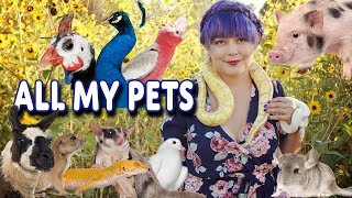 All My Pets 2019 | Happy Tails Animals