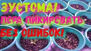 видео Выбираем плодородный грунт