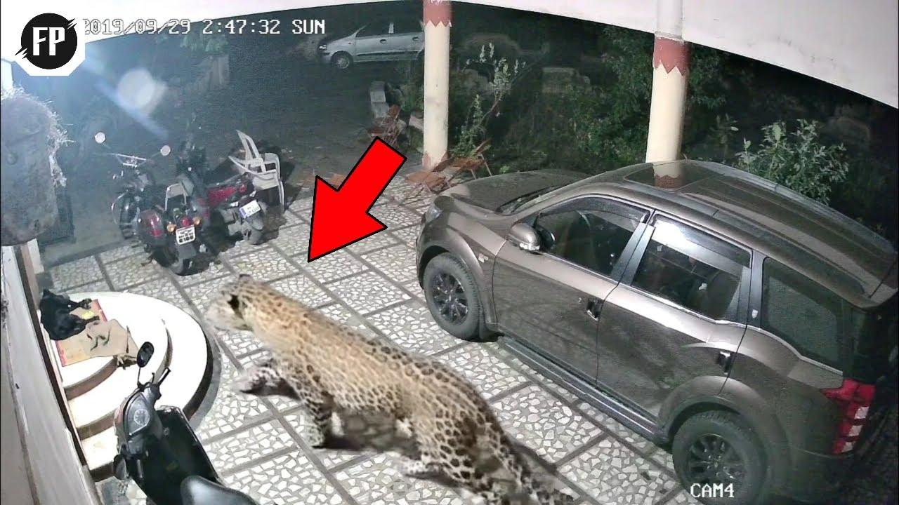 CCTV Jadi Saksi!! Segera Tutup Pintu Saat Malam Hari! Jangan Sampai Kejadian Mengerikan ini Terjadi!