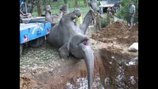 Elephant Death by Train Accident