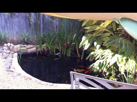 Koi Fish Pond Sydney Australia