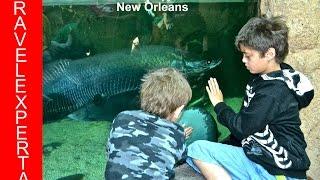audubon aquarium of the americas new orleans review