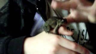 barkin mad toad