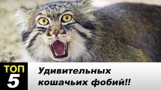 Интересные факты о кошачьих страхах!!