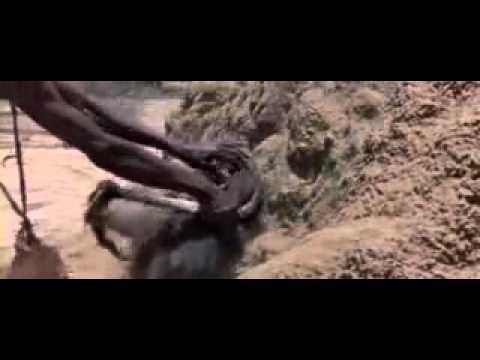 Le babouin et l 39 youtube - Babouin et belette ...