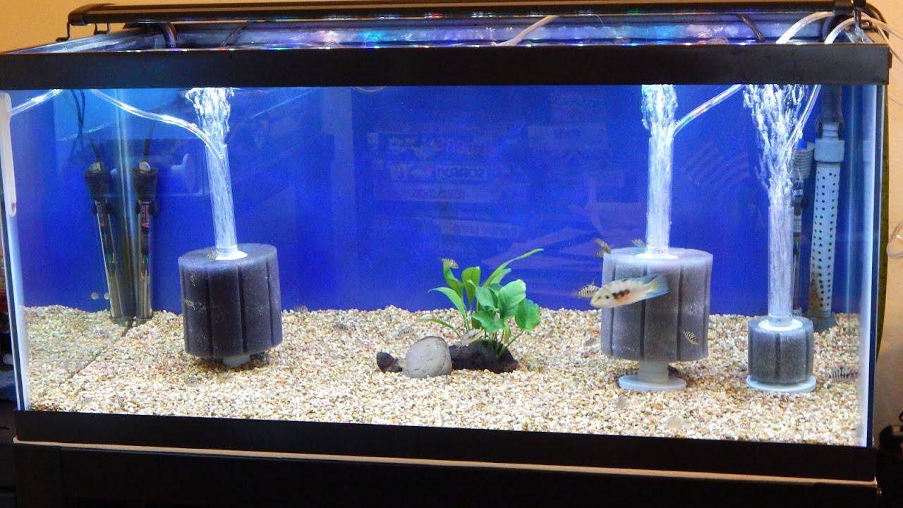 American Aquarium Products & Supply ATI sponge filters ...
