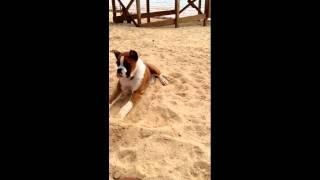 http://www.agriporky.it/reazione-di-un-cane-che-assaggia-uno-spicch...