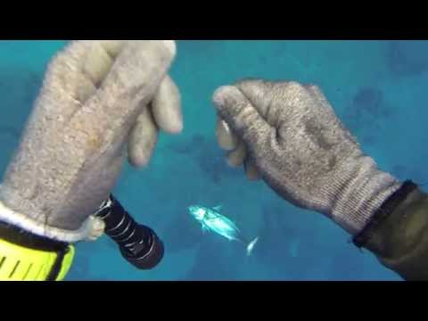Πελαγισια με μικρα οπλα---Tσαβαλος Αρης