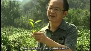 Чайная культура в горах Уишань Серия 1 Уишанский чай(Магазин Элитного Чая: http://daochay.ru Twitter: http://twitter.com/daochay Купить Да Хун Пао: http://daochay.ru/market Livejournal: ..., 2012-07-31T13:17:06.000Z)