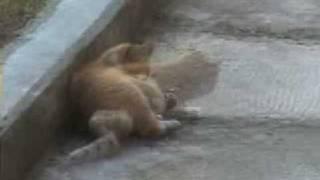 Gambar cover Fark Var - Kedinin fareyle oyunu :)