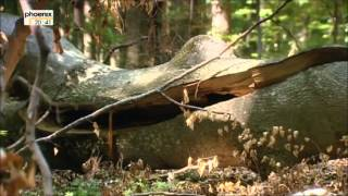 Europas Urwälder - Teil 4 - Wilde Karparten