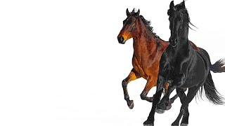 Lil Nas X - Old Town Road (feat. Billy Ray Cyrus) [Remix] EPIC Solo Cover By Ya Boy Penguin