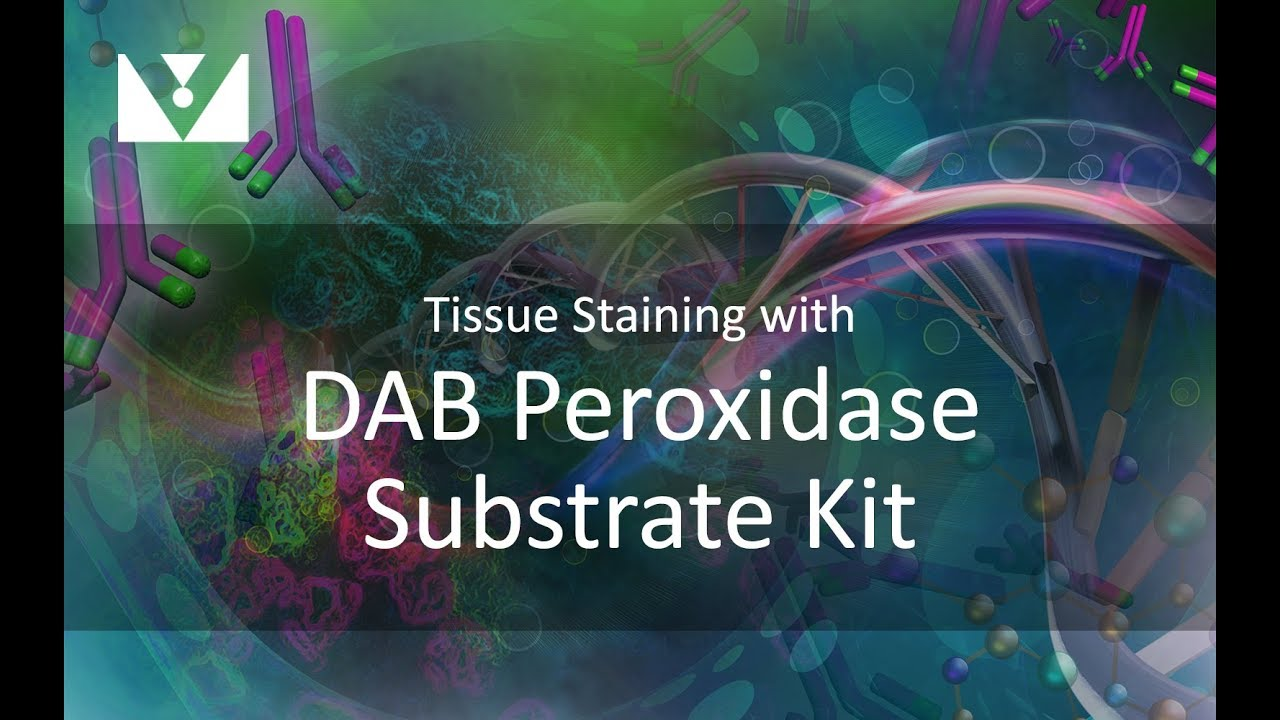 tissue staining with dab
